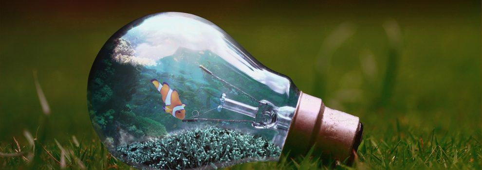 Beleuchtung im Aquarium - Lebenswichtig für Tiere und Pflanzen ?